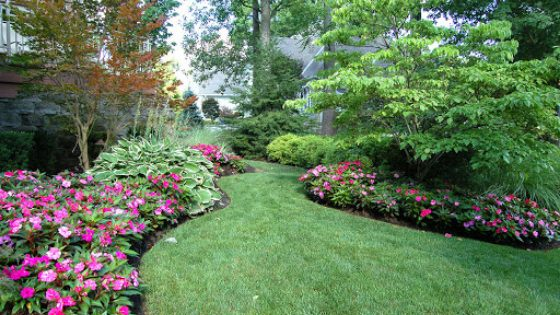 Beautiful pink petunias create boarders along a pathway.
