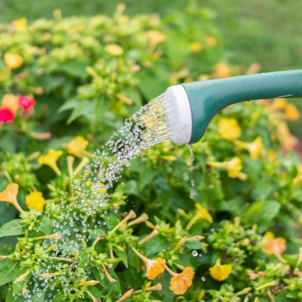 water your plants in fall