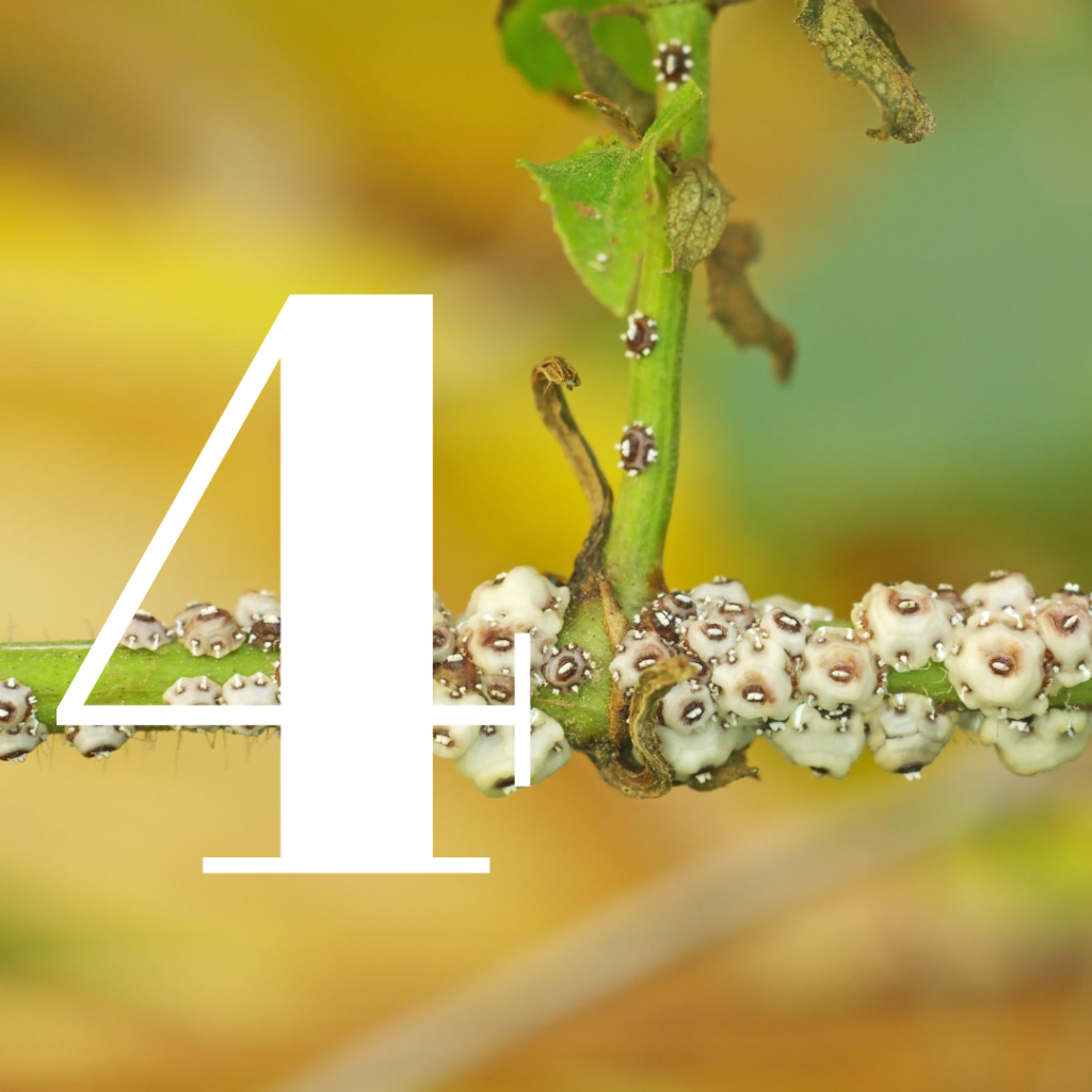 how to kill scale insects