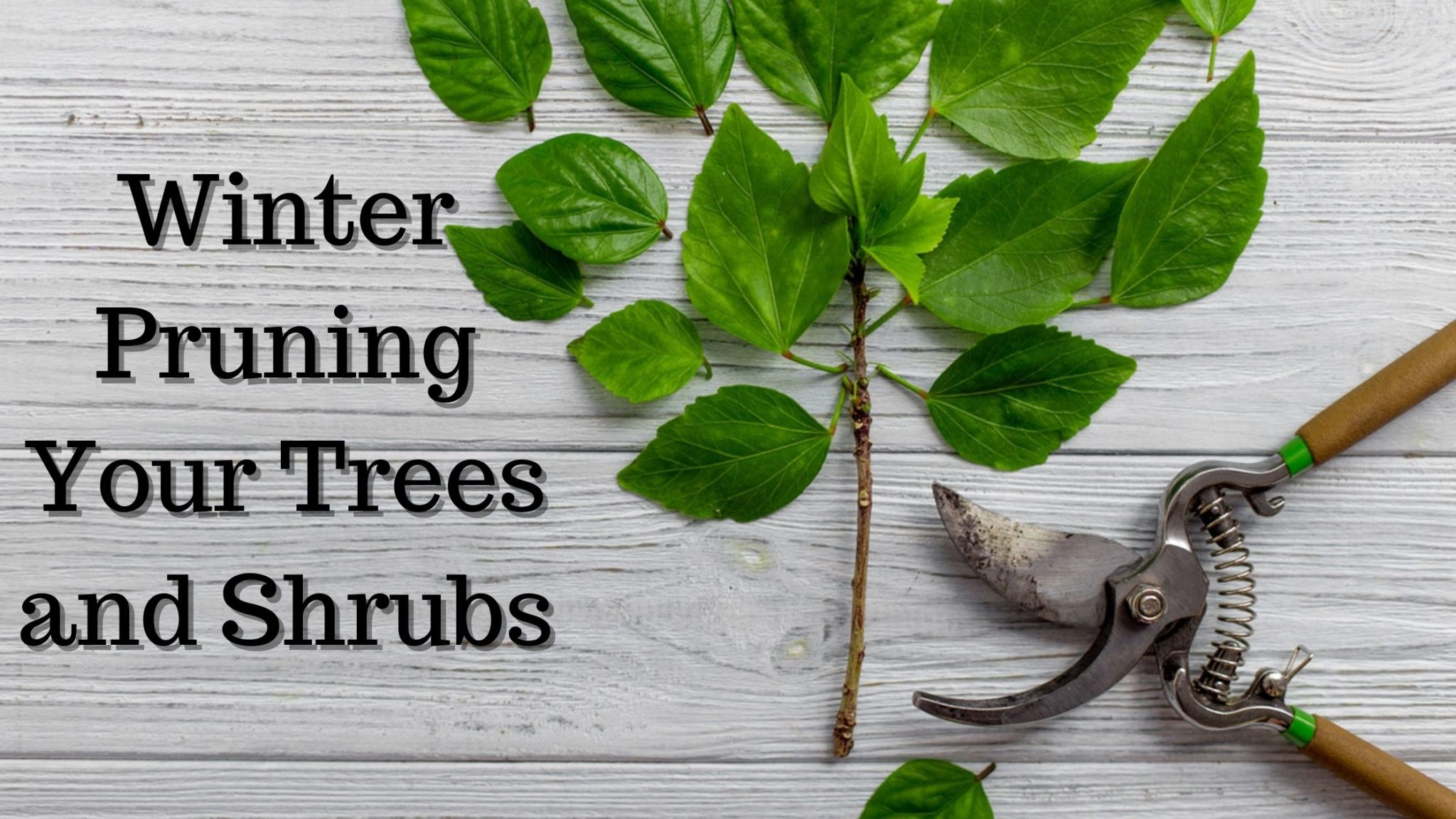 Winter Pruning Your Trees and Shrubs