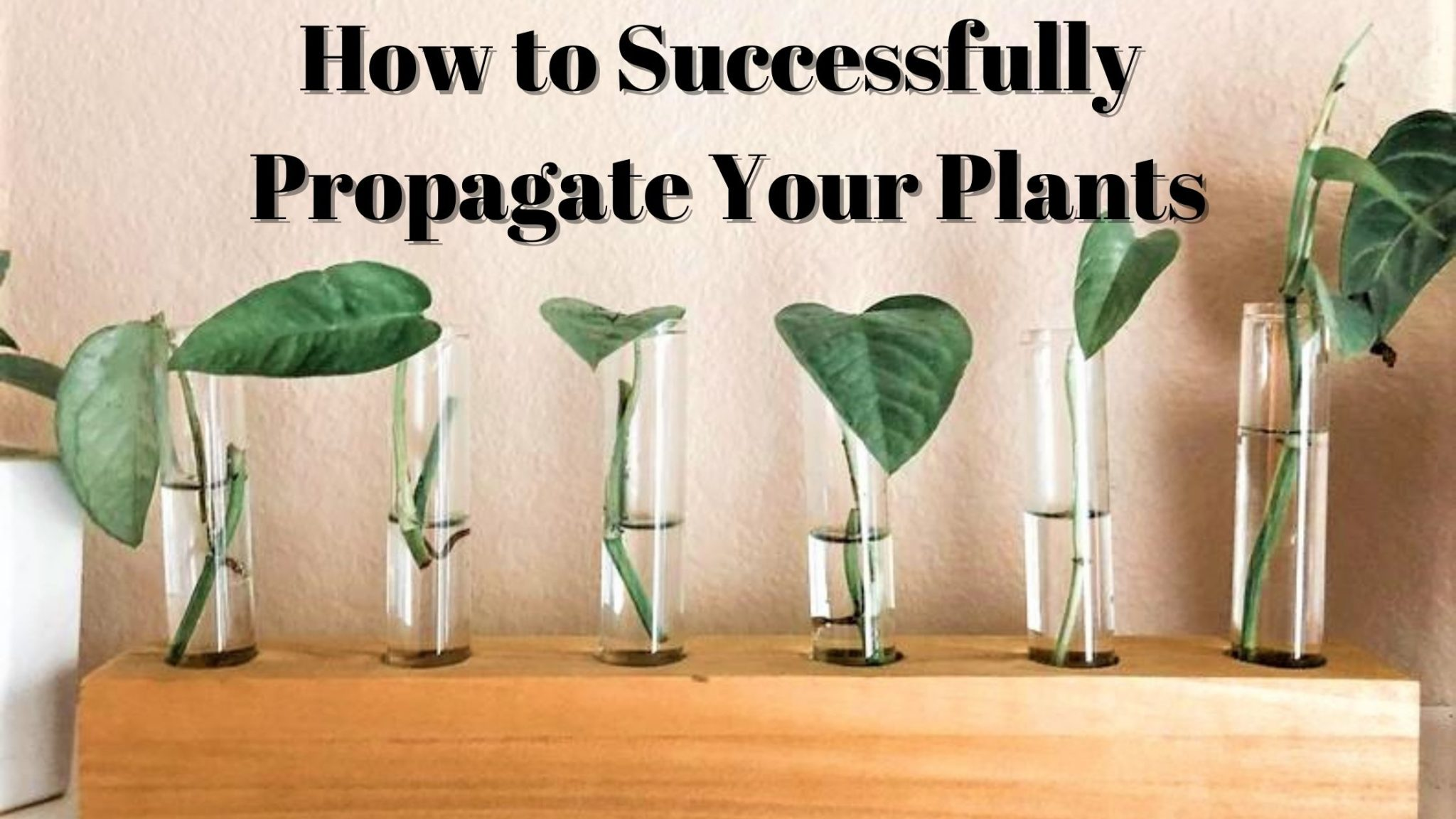How to Successfully Propagate Your Plants