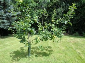 Beautiful and successful pruning