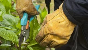 safe pruning