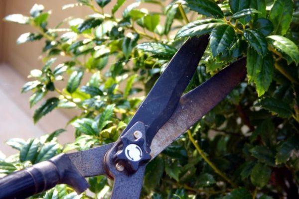 pruning image