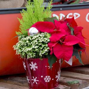winter interest container