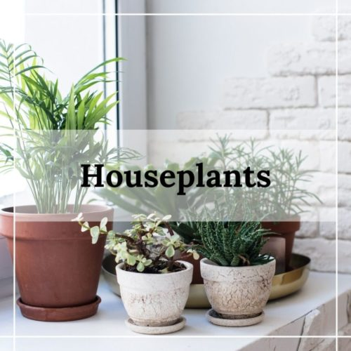 houseplants from patuxent nursery