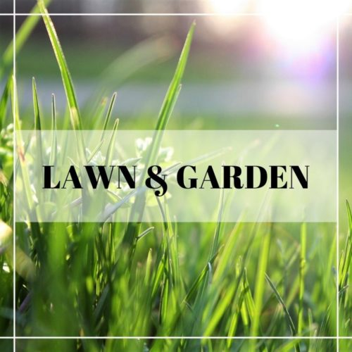 bright lawn in the spring sun