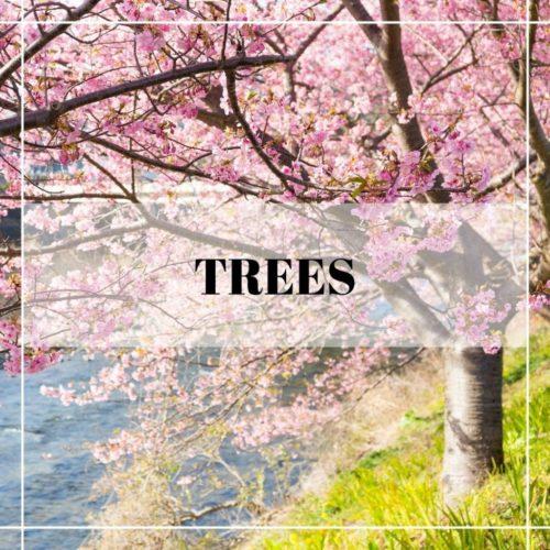 spring flowering dogwood