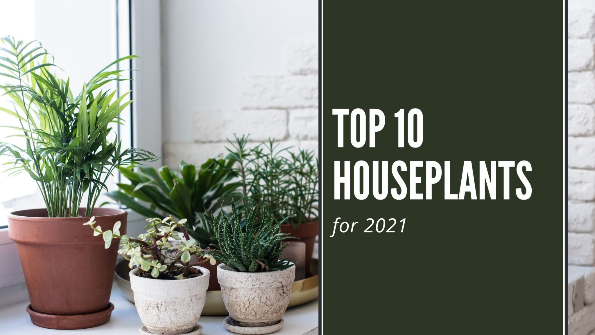 The Hottest Houseplant Trends for 2021