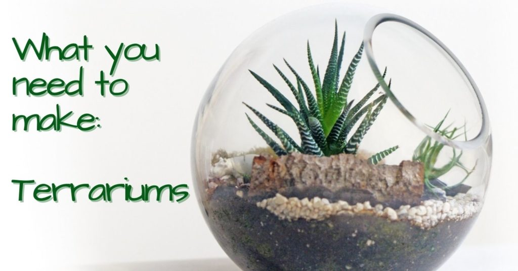 Terrariums and Supplies for Sale