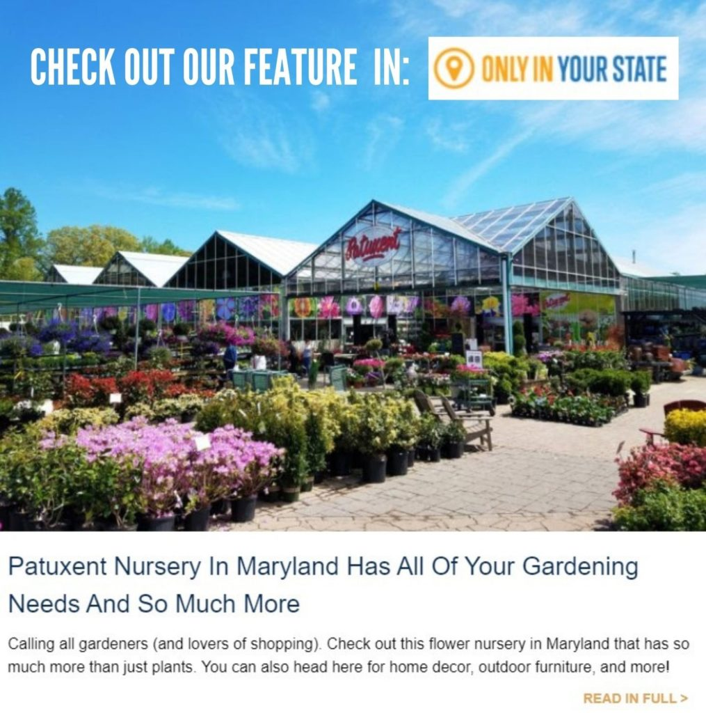 patuxent nursery featured in only in Maryland