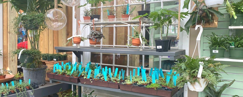 patuxent nursery terrarium shopping location