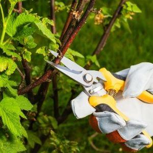 spring-garden-blog (2)