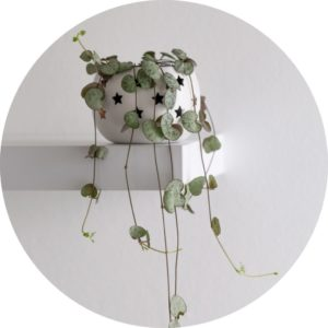 string-of-hearts