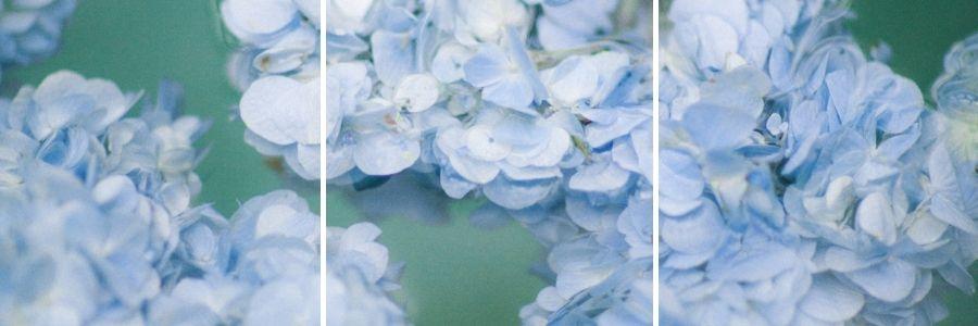 blue hydrangea flower heads in water