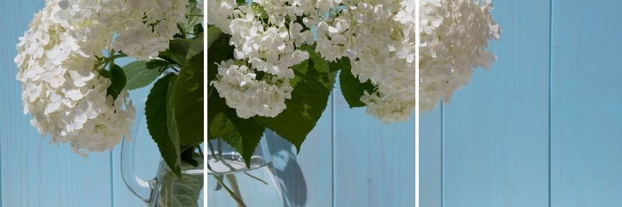 white hydrangea in a vase with blue wood background
