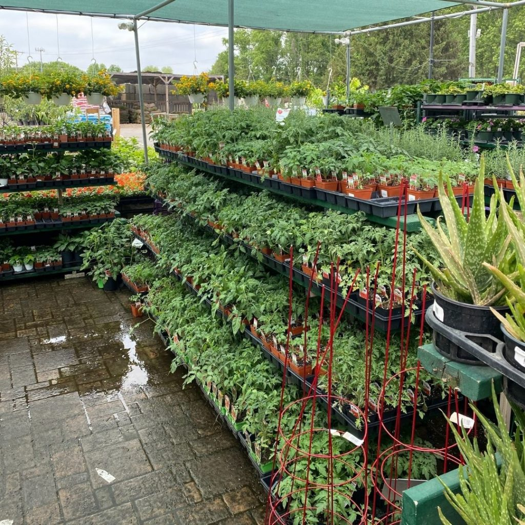 summer vegetables at patuxent nursery