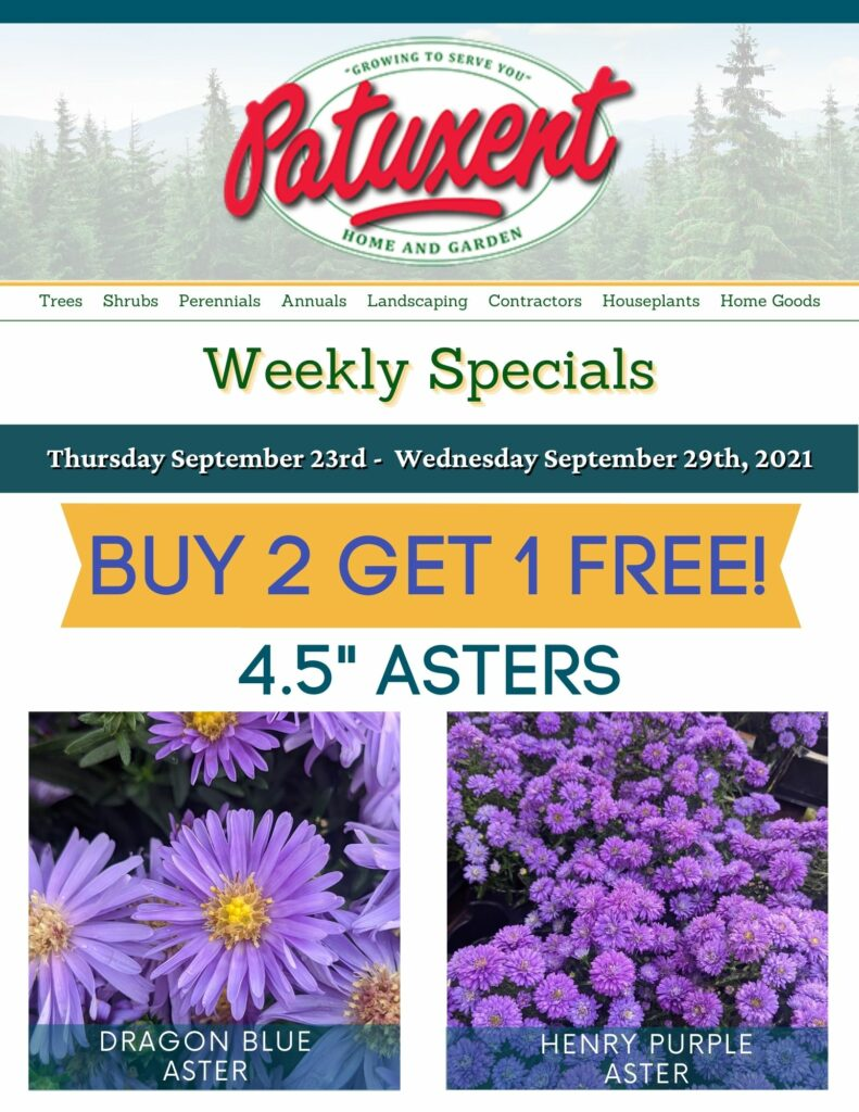 Weekly Specials Heading for Patuxent Asters Buy 2 Get 1 Free Nursery Email Newsletter