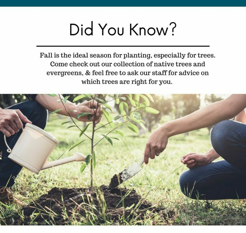 Fall is great for planting trees two people kneeling and planting a seedling