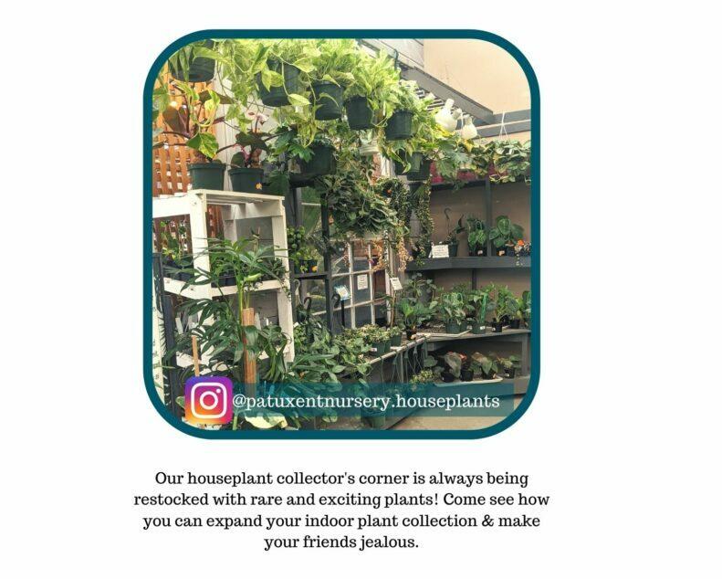 Instagram houseplant feature