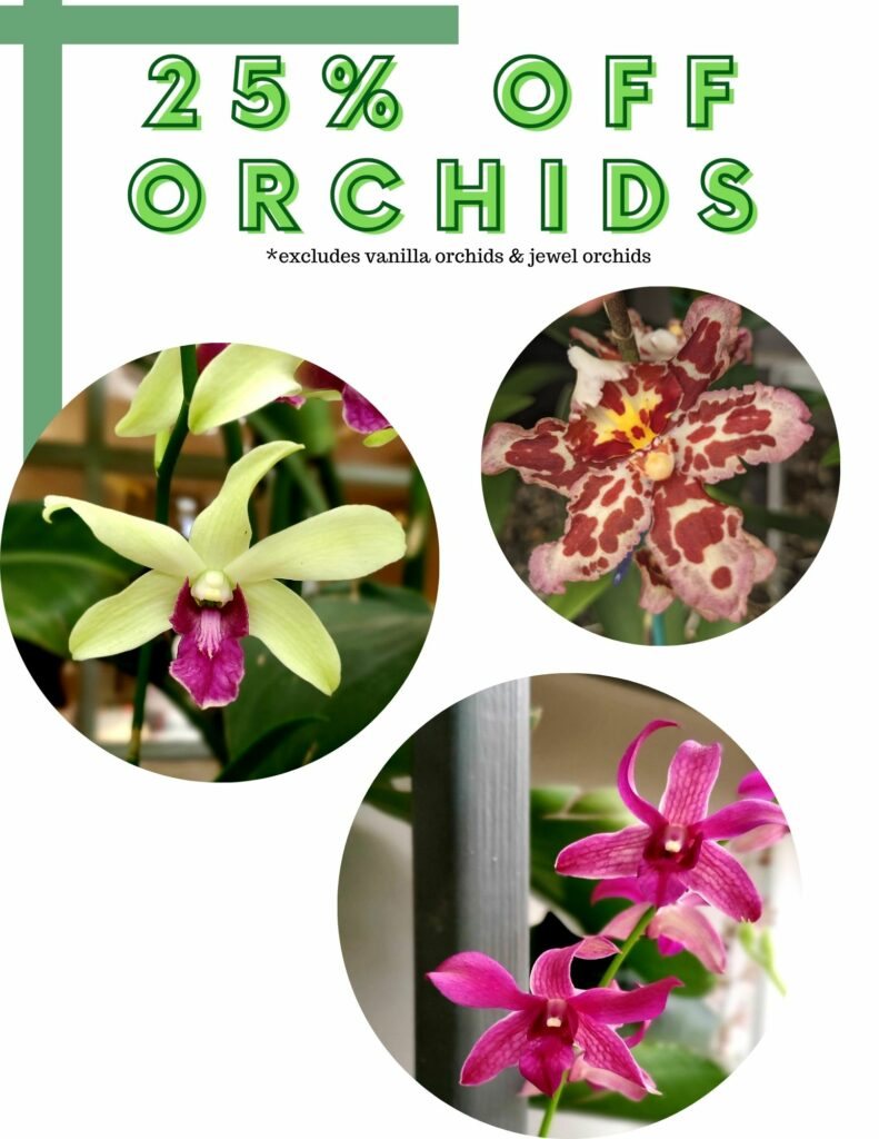 25% off Orchids Weekly Specials September 23rd