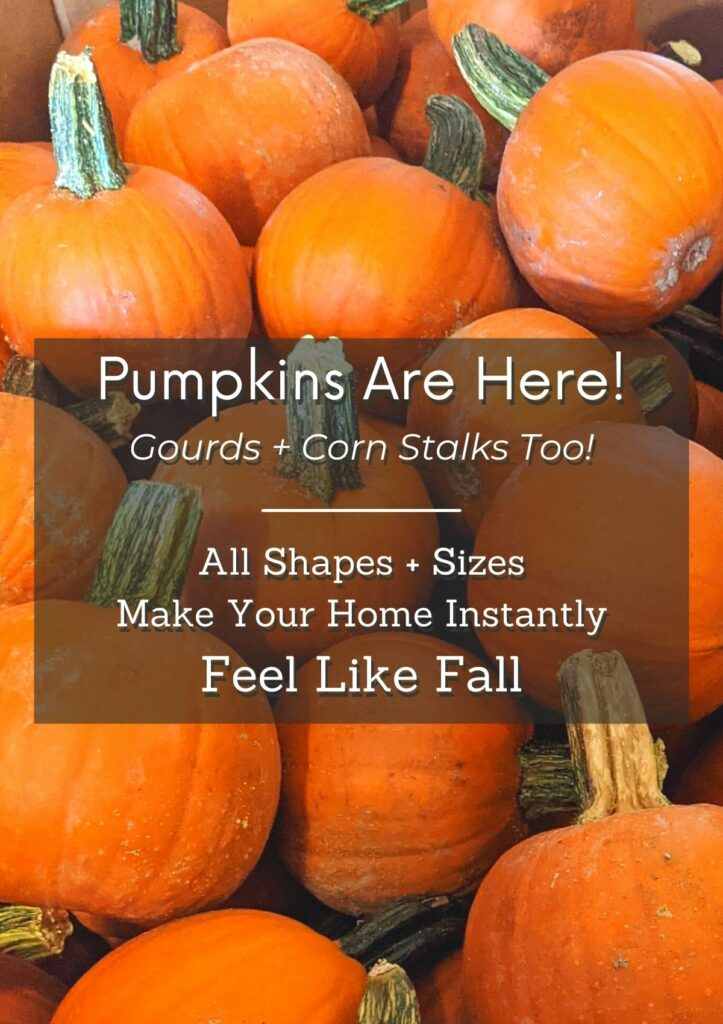 Fall Features Homepage 2