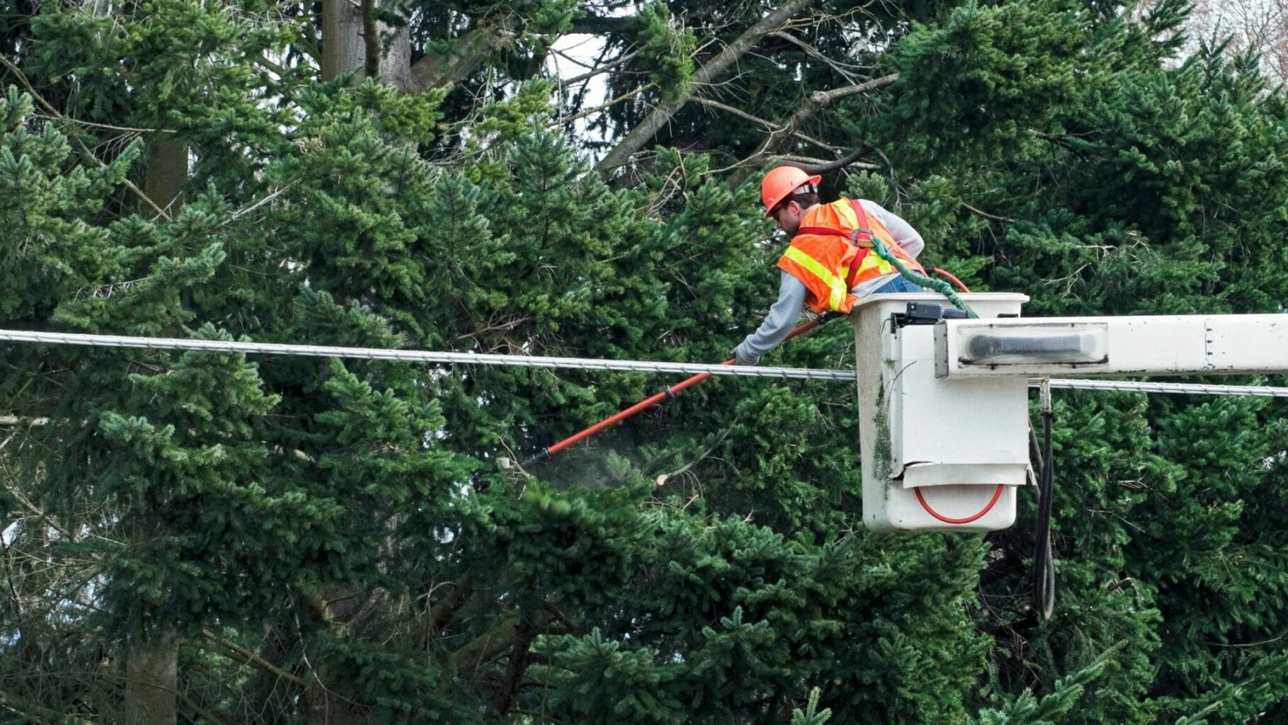Man Trimming Tree Away from Power Lines