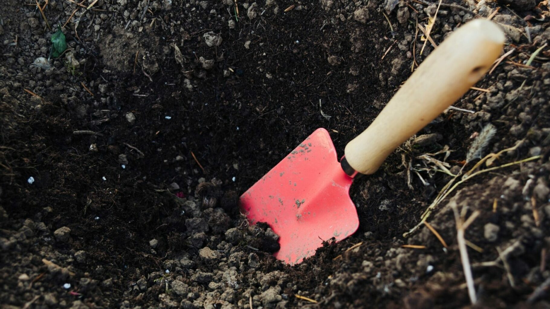 trowel in a hole of good soil