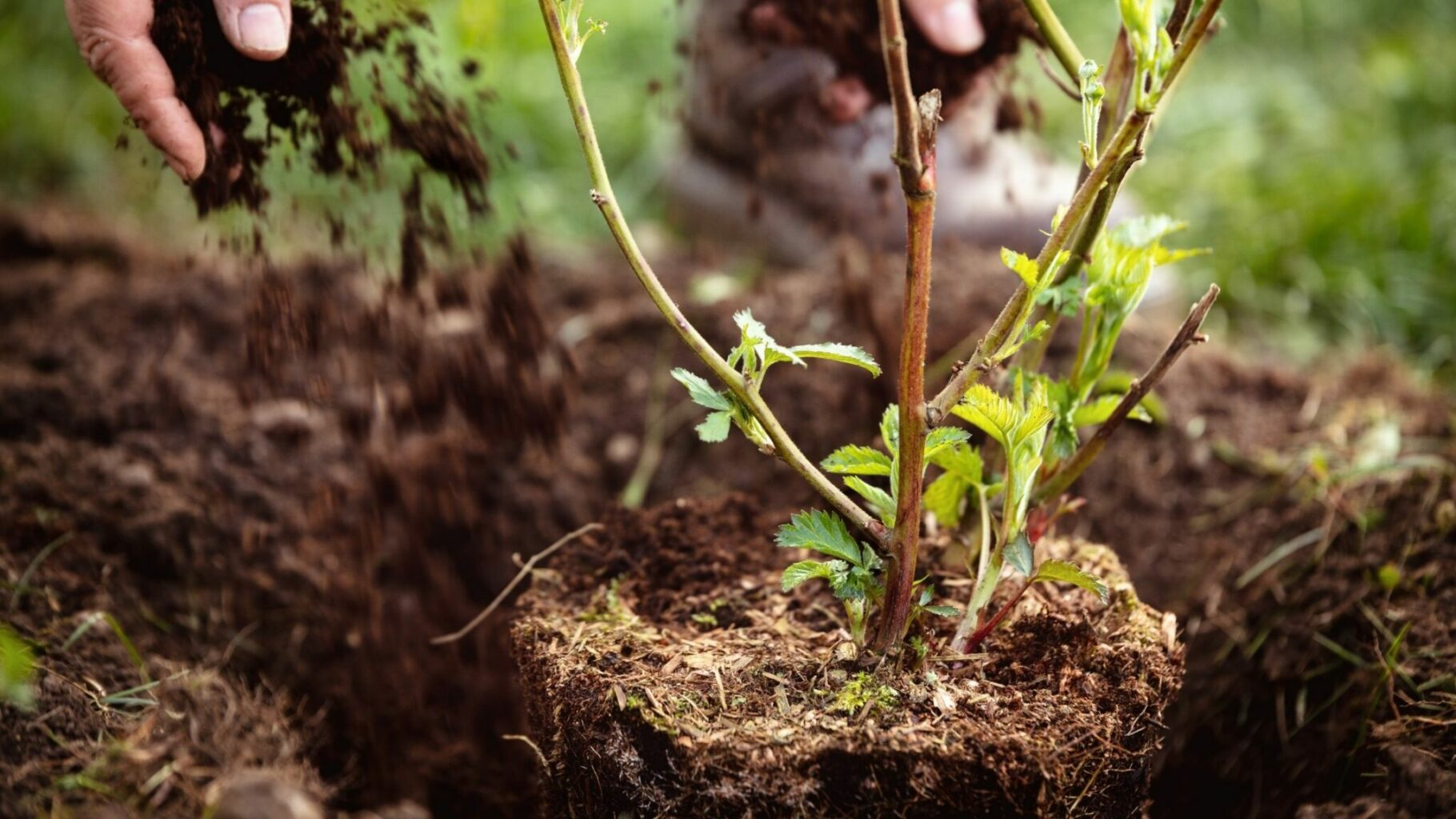 planting a plant but don't plant too deep