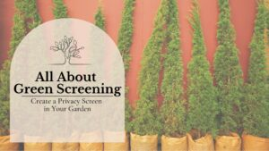 All About Green Screening