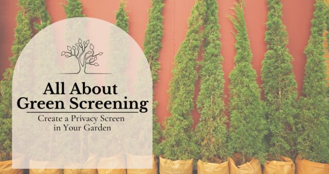 All About Green Screening | Create a Privacy Screen in Your Garden