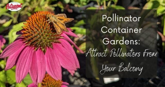 Pollinator Container Gardens: Attract Pollinators From Your Balcony