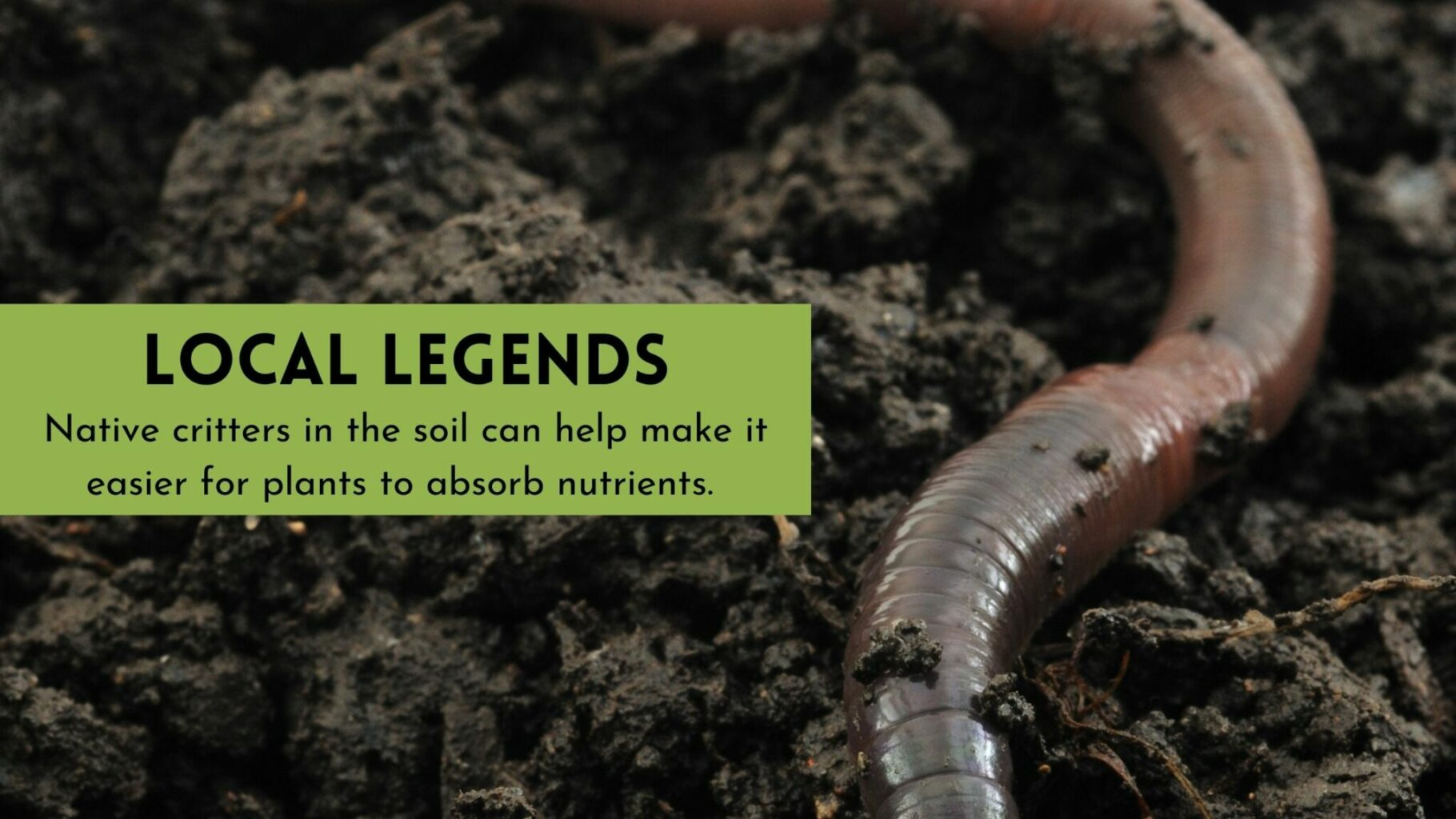 worm calling through healthy soil helping feed plants