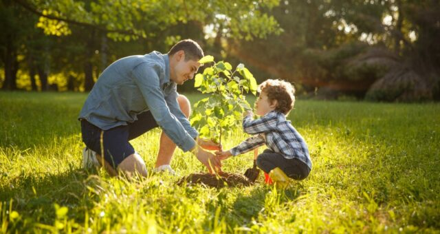 How to Care for a Young Tree