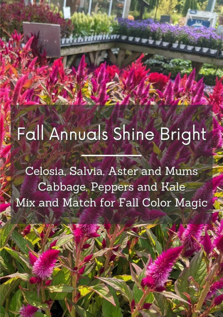Fall Annuals Web Feature
