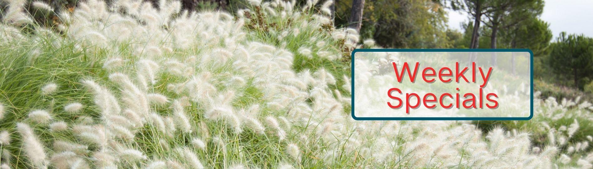 Ornamental Grasse Weekly Specials Banner