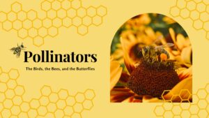Pollinators The Birds, the Bees, and the Butterflies