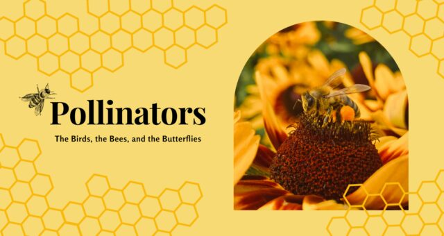 Pollinators: The Birds, the Bees, and the Butterflies