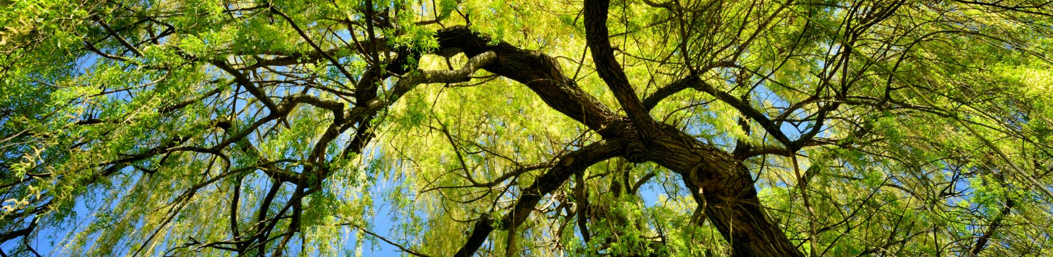 ShadeTrees