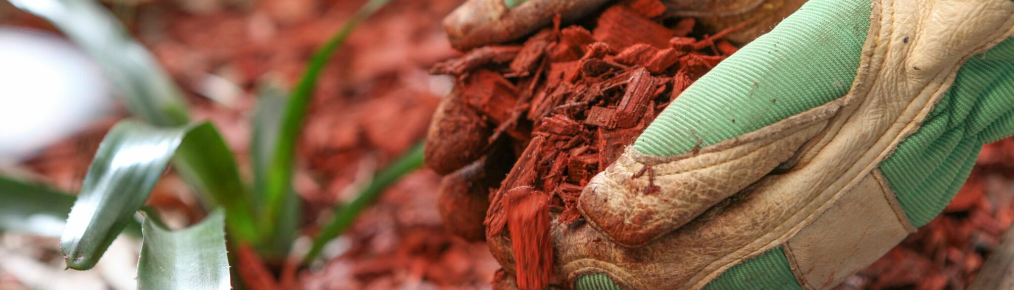 Bloved Hands Scooping Red Mulch
