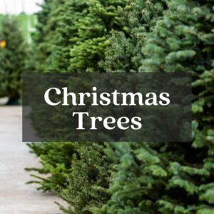 real christmas trees live christmas trees fake christmas trees