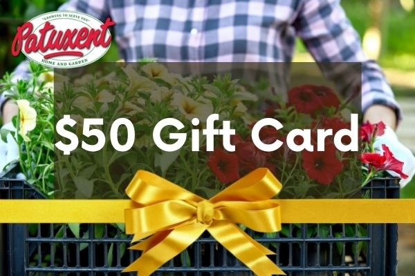 25 gift card image gardener with annuals