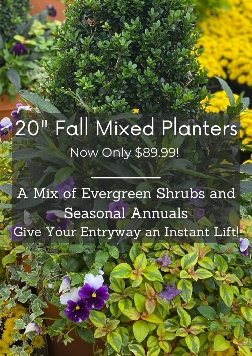 mixed planters are on sale