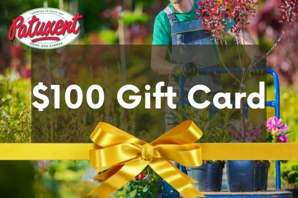 25 gift card image gardener with shrubs