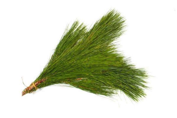 Pine Bundle