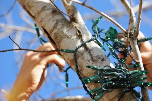 man hanging christmas lights onto a tree branch
