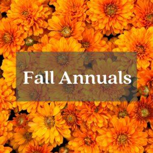 orange mums fall annuals flowers