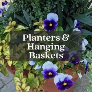 mixed planter with annuals