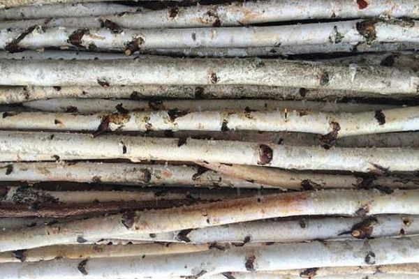 pile of long white birch poles for christmas decorations