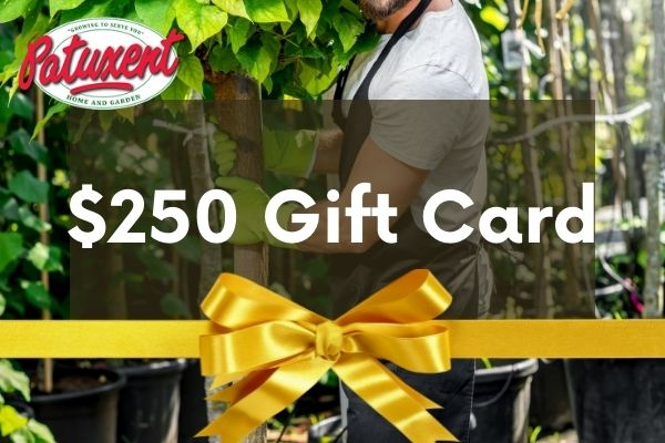 25 gift card image gardener with trees